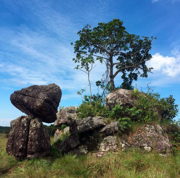 colombia jungle